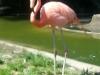 Columbus Zoo-19.jpg