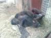 Columbus Zoo-7.jpg