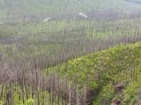 Glacier National Park-10.jpg