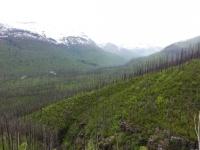Glacier National Park-11.jpg