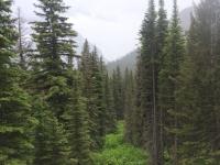 Glacier National Park Day 2-46.jpg