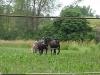 Living History Farm-103658.jpg