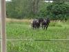 Living History Farm-103659.jpg