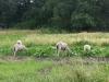 Living History Farm-113316.jpg
