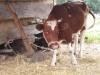 Living History Farm-113606.jpg