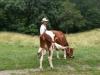Living History Farm-113703.jpg