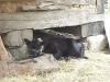 Living History Farm-113801.jpg