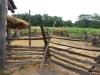 Living History Farm-113947.jpg