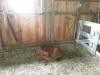 Living History Farm-121336.jpg
