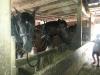 Living History Farm-121426.jpg