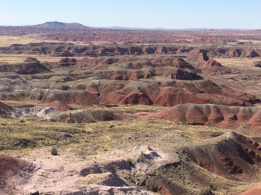petrified-forest-11