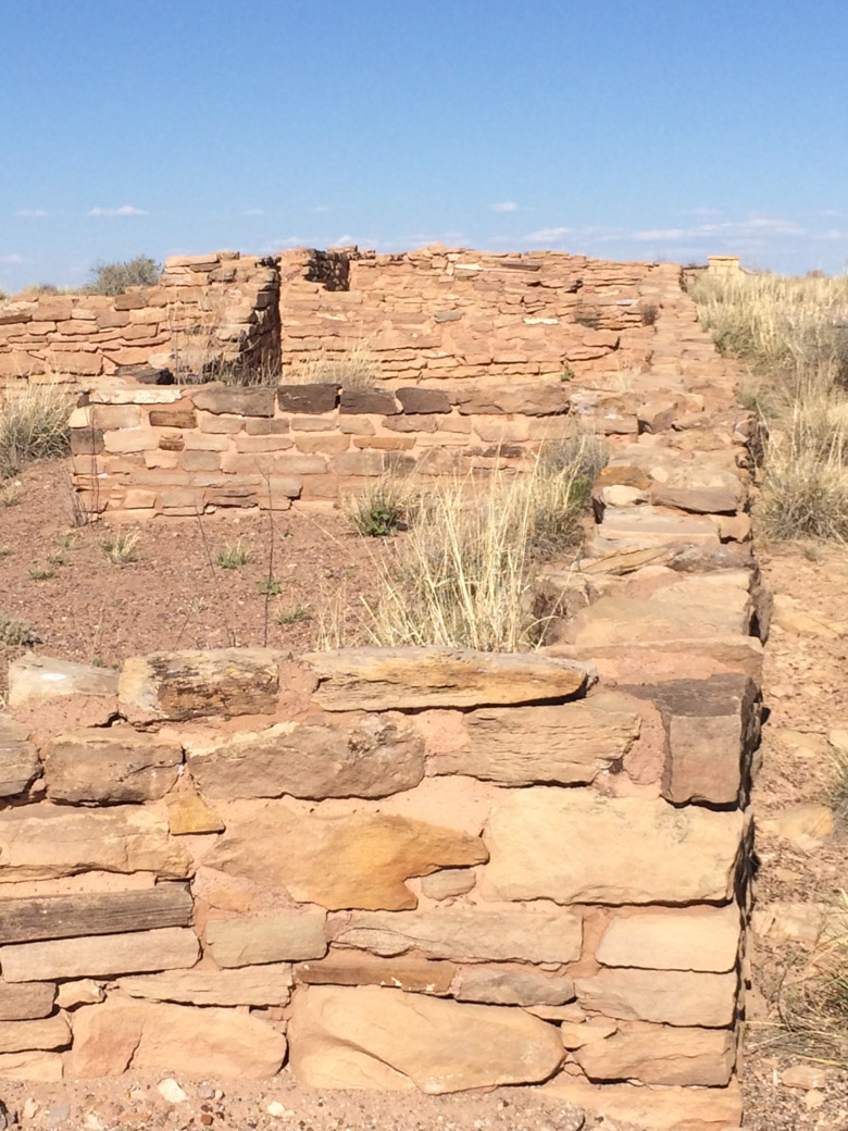 petrified-forest-23