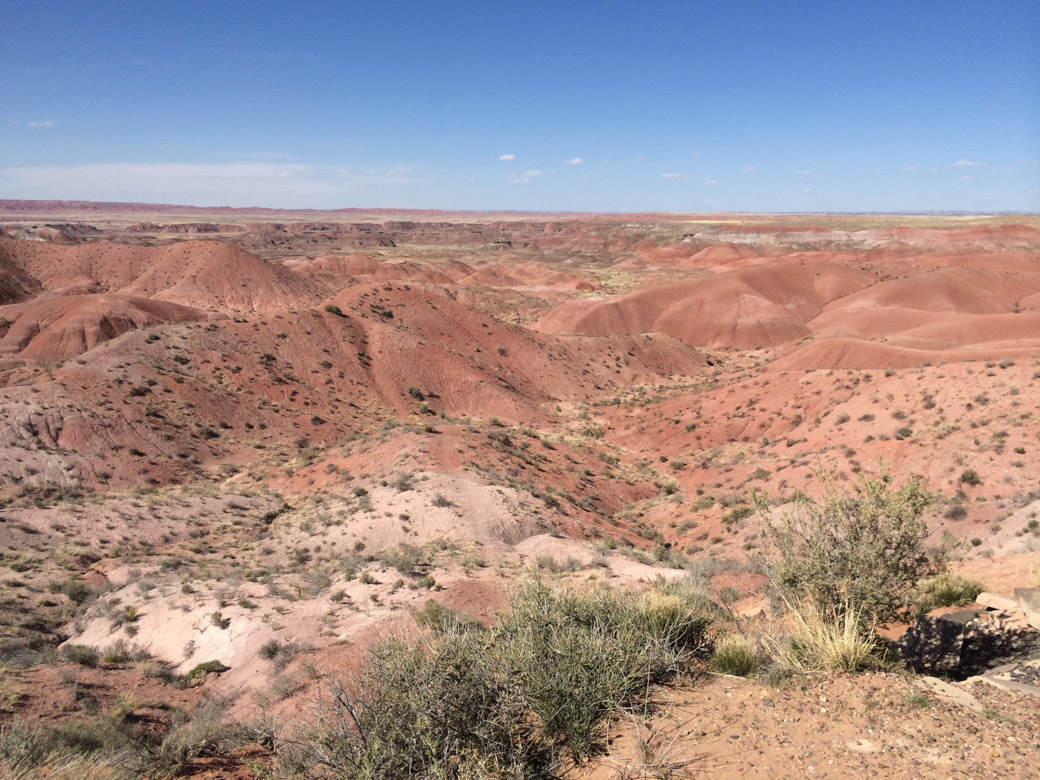 petrified-forest-3