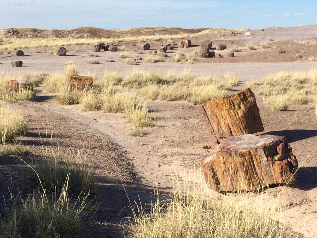 petrified-forest-31