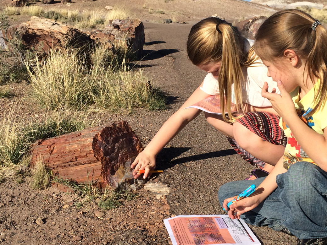petrified-forest-33