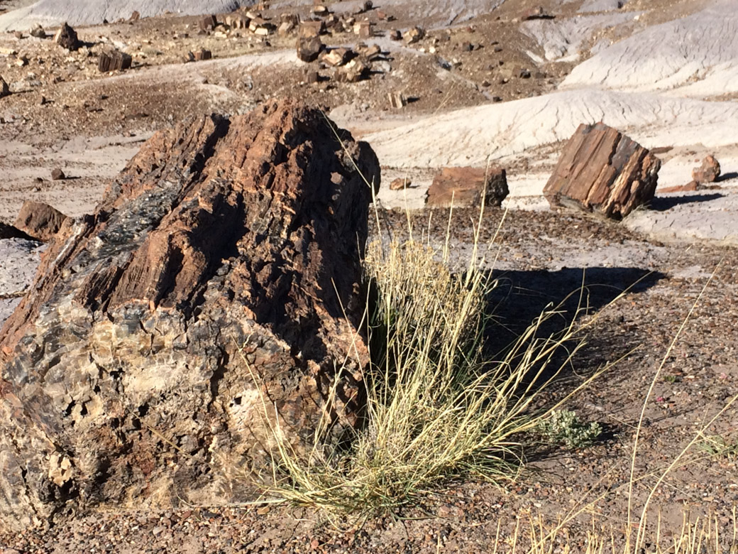 petrified-forest-38