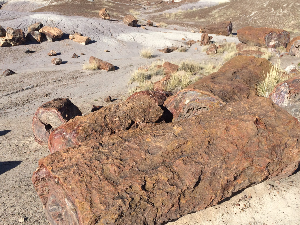 petrified-forest-39
