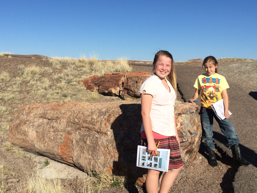 petrified-forest-40