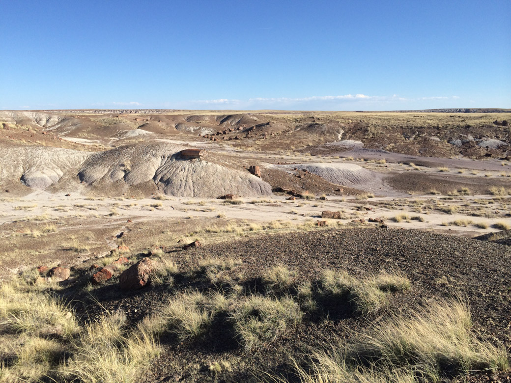 petrified-forest-42