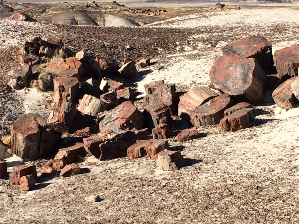 petrified-forest-44