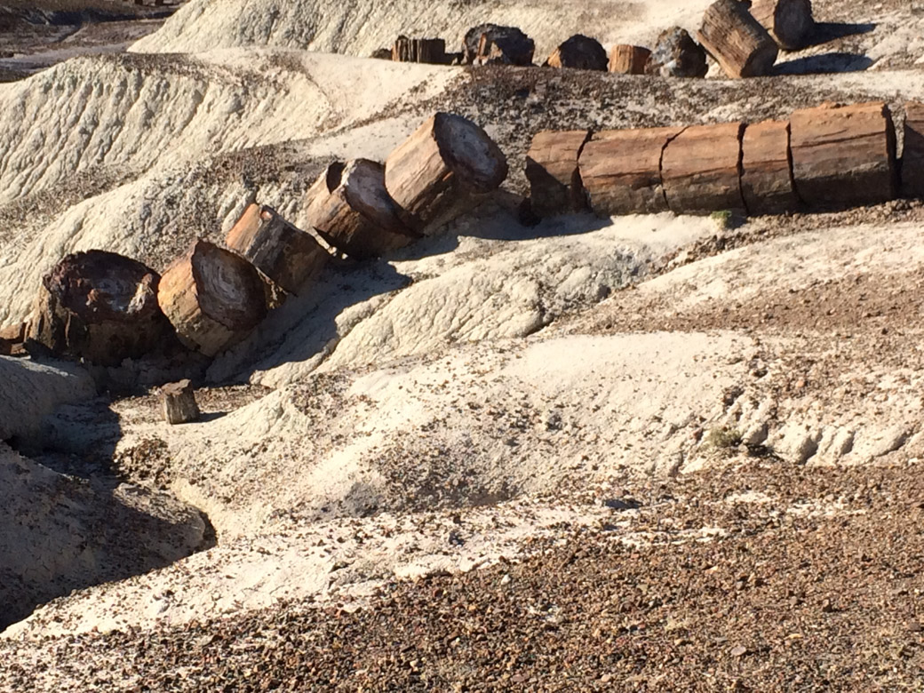petrified-forest-47