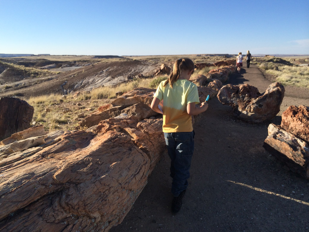 petrified-forest-51