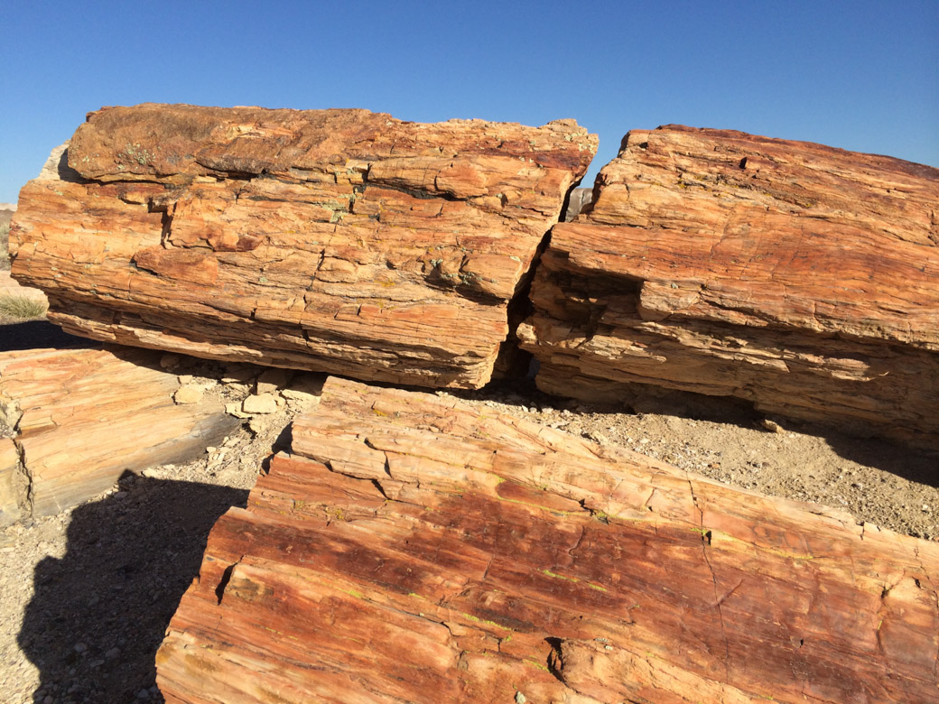 petrified-forest-52