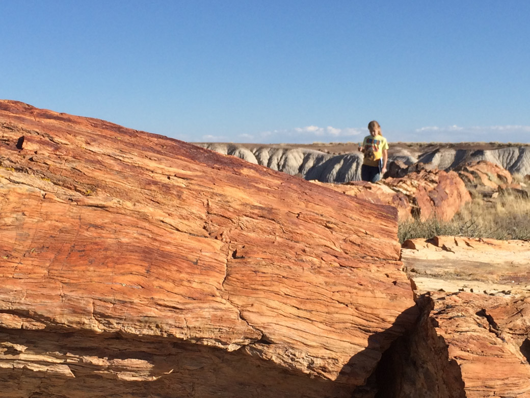 petrified-forest-53