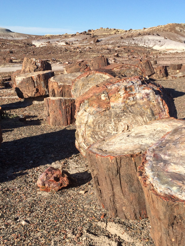 petrified-forest-57
