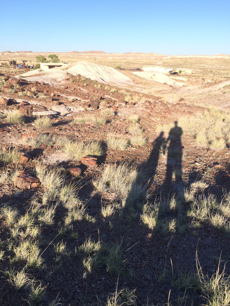 petrified-forest-63