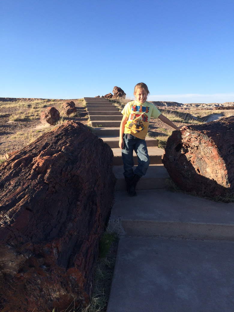 petrified-forest-64