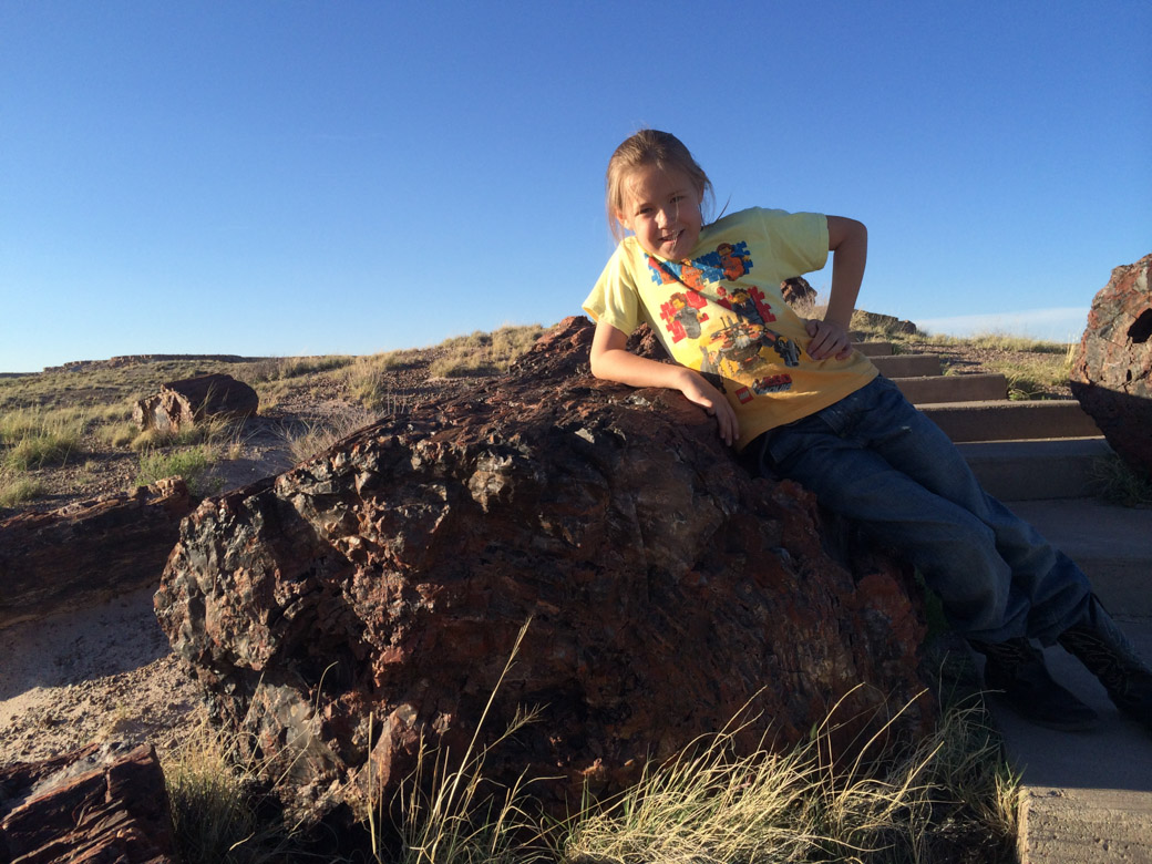petrified-forest-65