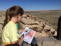 petrified-forest-16