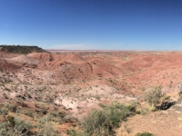 petrified-forest-2