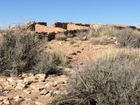 petrified-forest-22