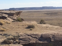 petrified-forest-27