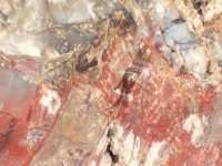 petrified-forest-36