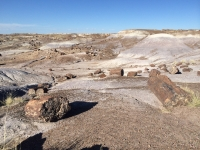 petrified-forest-37