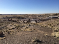 petrified-forest-41