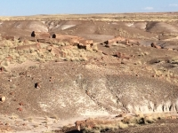 petrified-forest-43