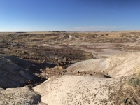 petrified-forest-46