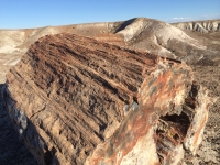 petrified-forest-50