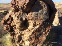 petrified-forest-55