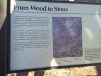 petrified-forest-59