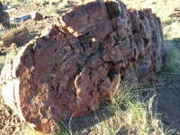 petrified-forest-60