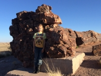 petrified-forest-67