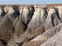 petrified-forest-69